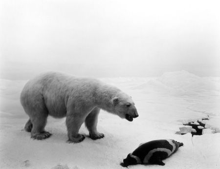 hiroshisugimoto-polarbear