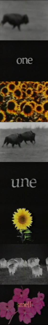 u2onebuffalovideo1